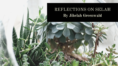 "A photo of succlents with text that says ""Reflections from Selah, by Jihelah Greenwald"""